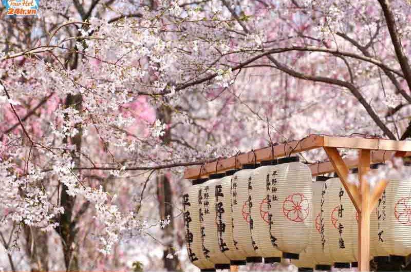 kinh nghiệm du lịch Nhật Bản tháng 4