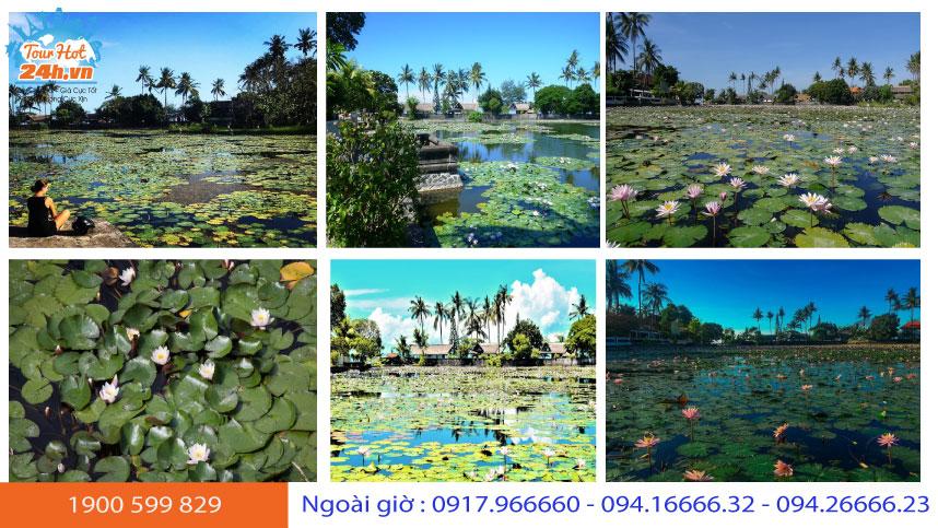 ho-sen-lotus-lagoon