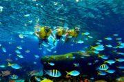 0000300_ve-sea-aquarium