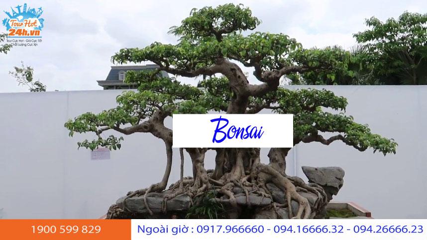 bonsai-bao's-family-garden