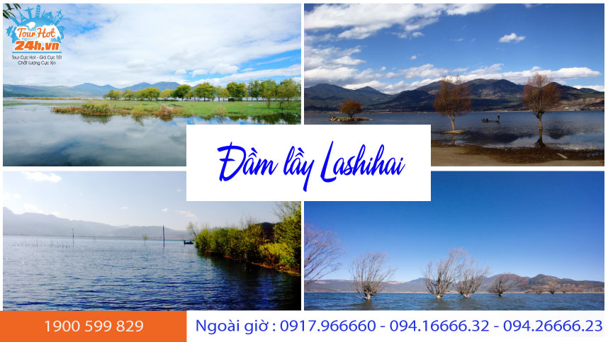 dam-lay-lashihai